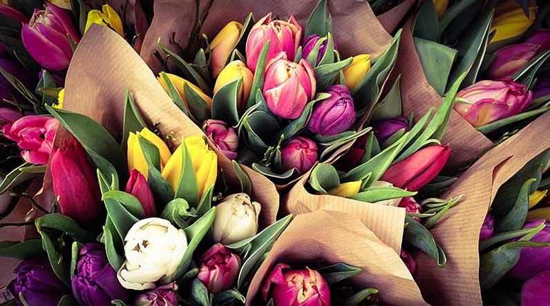 Bunches of tulips / Shutterstock