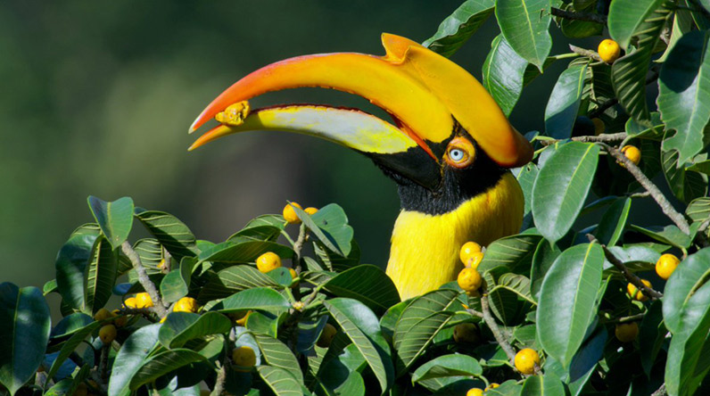 Exotic bird on Our Planet / Netflix